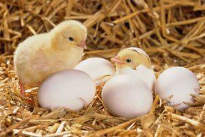 Mơ thấy trứng đánh con gì ? Thắc mắc của anh em lô đề