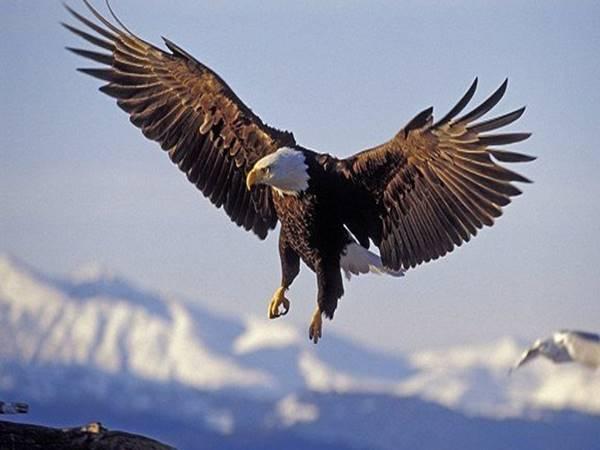 Mơ thấy chim đại bàng đánh lô đề con nào dễ trúng