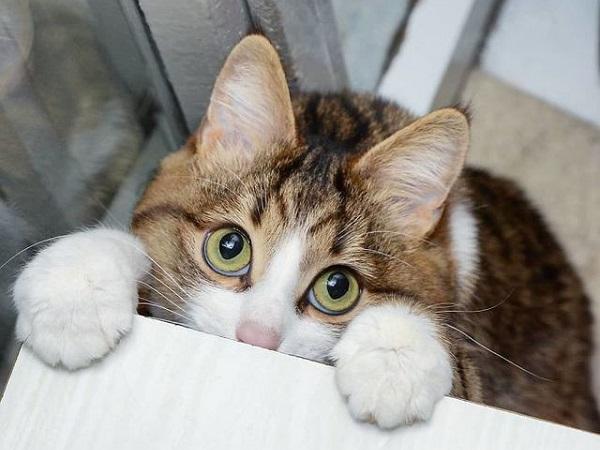 Mơ thấy mèo biến thành rắn là điềm báo gì, đánh con nào để trúng?